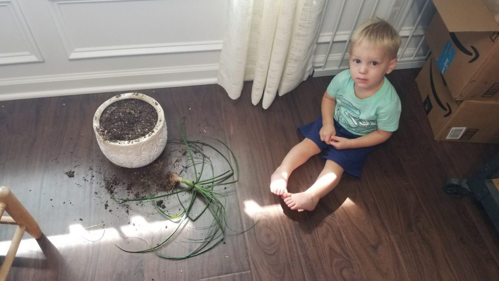 toddler and houseplant