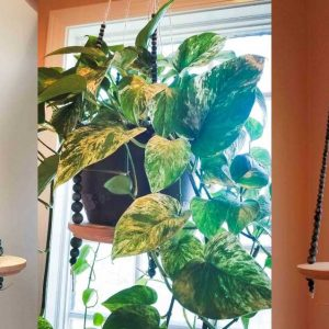 diy hanging plant shelf with wooden beads