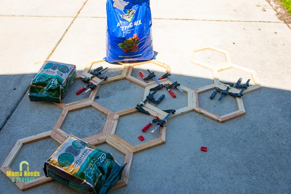 clamp hexagons together to create honeycomb DIY garden trellis