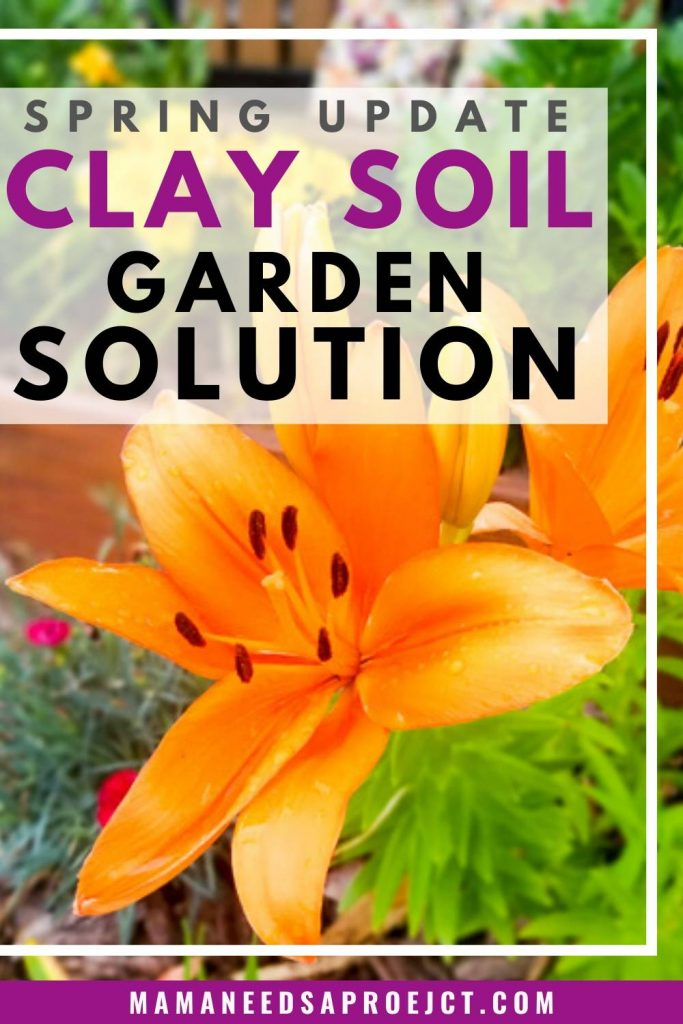 text: spring update clay soil garden solution, photo of orange lilies in a raised flower bed