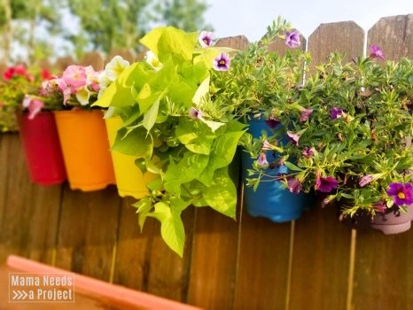 upcycled plastic flower pots painted like a rainbow and mounted to a fence with flowers blooming